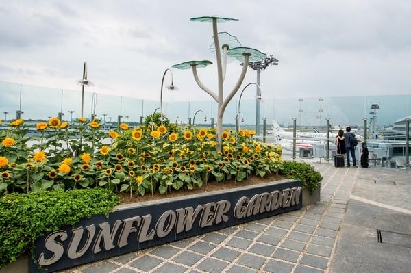 Desde el jardín de girasoles, se divisa una de las tantas áreas donde se abordan aeronaves. FOTO: Changi Airport Group