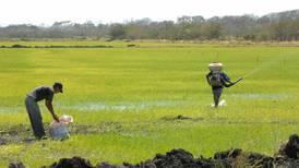 Conarroz prestará dinero de banca de desarrollo y asegura que asumirá los riesgos