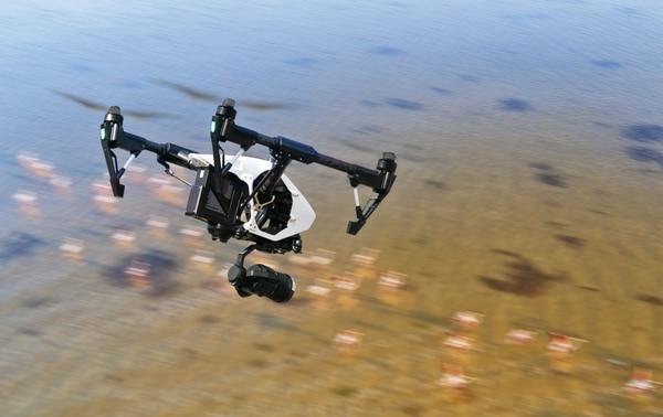 El uso de tecnologías móviles como los drones permite el conteo de flamingos en Francia, sin perturbar a estos animales.