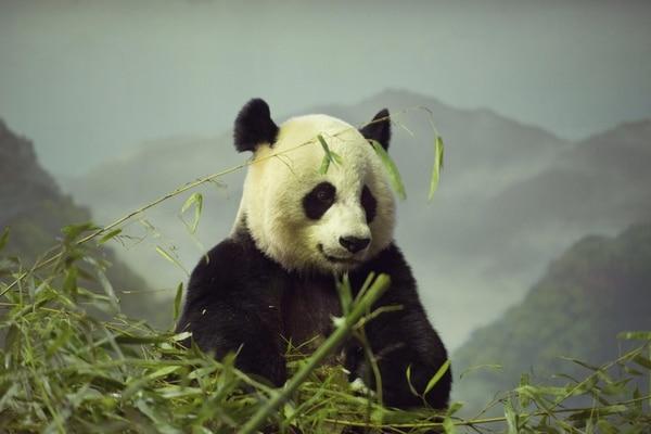 Bao Bao nació el 23 de agosto, pesa ya uno 9 kilos y se encuentra sana, pese a las bajas temperaturas de la capital estadounidense.