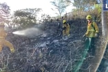 (Video) Incendios forestales afectan biodiversidad