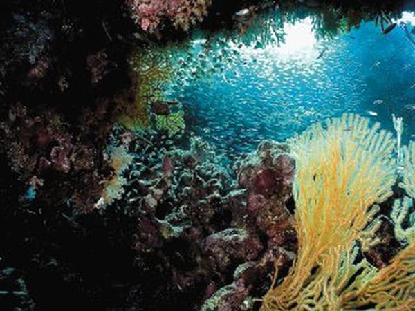 Una cámara submarina del Departamento de Pesca y Océanos de Canadá, equipada con instrumentos de navegación, cámaras de alta resolución y proyectores, capturará imágenes del suelo marino a más de 200 metros de profundidad. Foto con fines ilustrativos. AFP/TARIK TINAZAY.