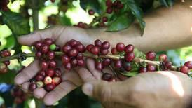 Café de Costa Rica de alta calidad se cotiza a precio récord de $30.000 el quintal