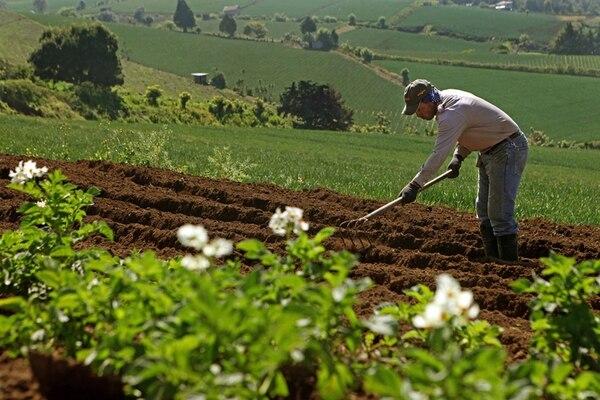 La banca para el desarrollo pretende llegar a pequeños agricultores, pero todavía pide requisitos que muchos no pueden cumplir. El sistema dice que tiene prestados ¢16.428 millones en el agro (el mayor monto) y ¢14.153 millones en micro, pequeñas y medianas empresas. | ARCHIVO/MAYELA LÓPEZ