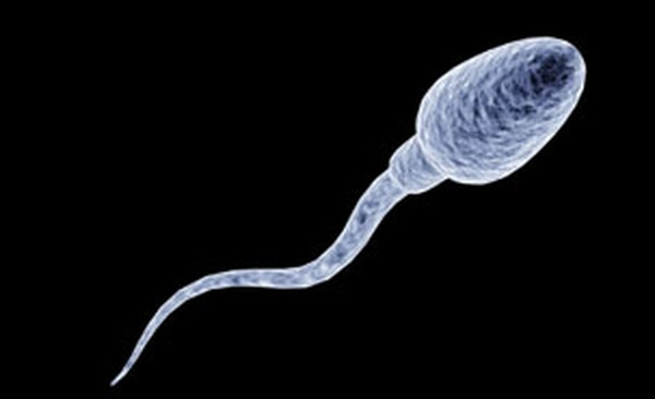 La pastilla DMAU busca que la producción de esperma se reduzca y esto evite embarazos. Fotografía: Universidad de Montreal