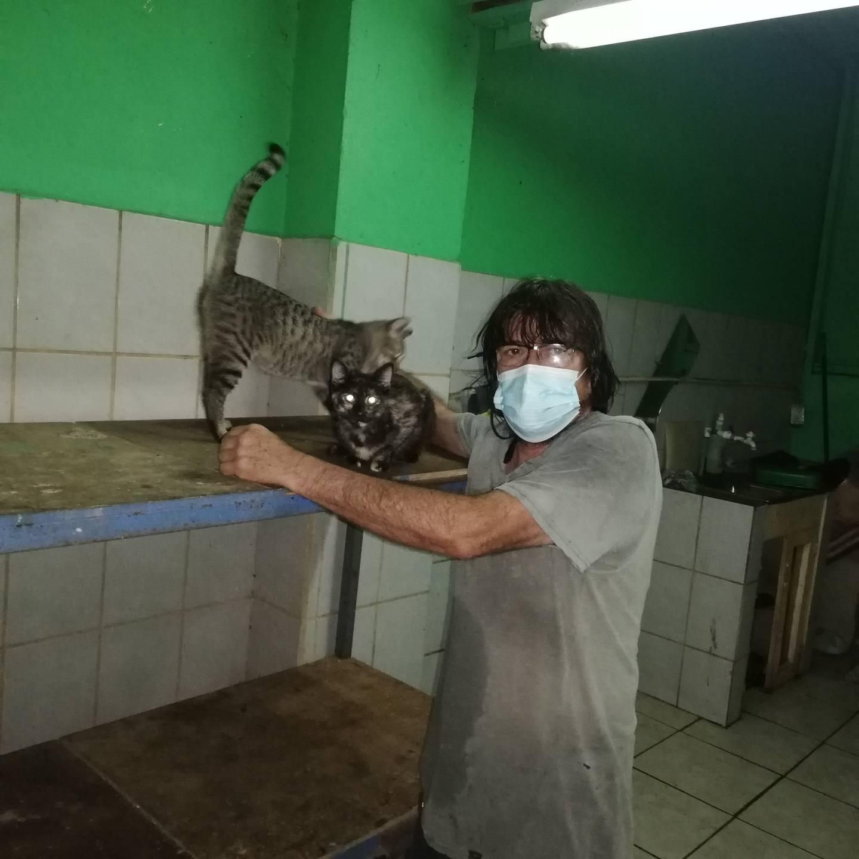 Don José Vargas Arrieta, mejor conocido como don Gato, es el protector de todos los michis que viven en el mercado Borbón desde hace dos años y medio atrás que la administración permitió un espacio en el sótano para que tuviera una gatera