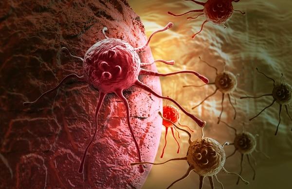 Células cancerígenas. Foto Archivo