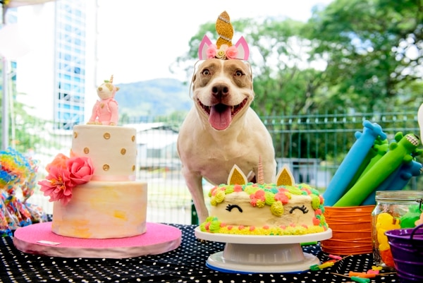 En sus siete años, a Puppy Grey le han festejado su cumpleaños cuatro veces. Todas sus fiestas han sido temáticas. Foto: Puppyrazzi by Luis Navarro para LN