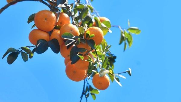 Mandarina portada