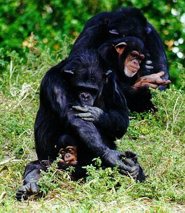 Los investigadores confirmaron que no solo los humanos comprenden que la cooperación es vital para la supervivencia; algunos animales también tendrían esto claro.