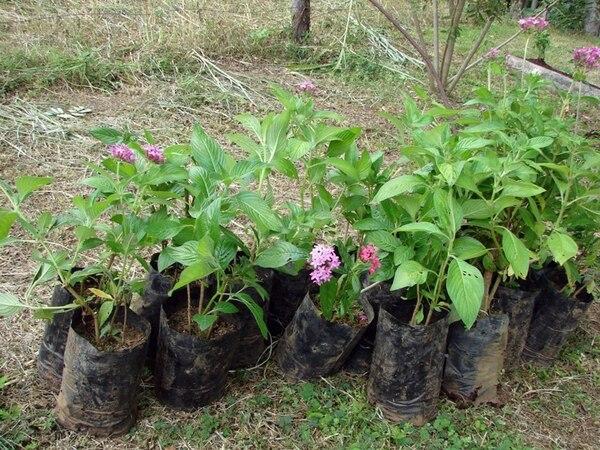 Se necesitan 9.300 árboles para reforestar los corredores biológicos San Juan-La Selva y Miravalles-Tenorio. | LN