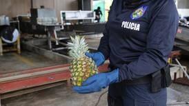 Dos piñeras de Pital de San Carlos allanadas por sospechas de trasiego de cocaína a Europa y Estados Unidos