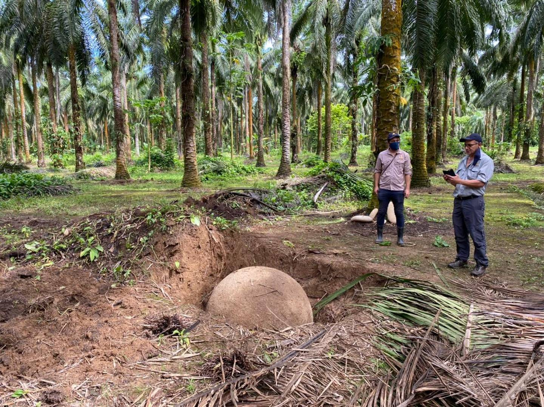 La esfera de piedra encontrada mide 1.23 metros de diámetro; está en perfecto estado de conservación y se ubica en una finca privada en el sector de Finca 12, en Palmar Sur de Osa, provincia de Puntarenas.