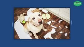 Los perros también sufren la ansiedad del confinamiento