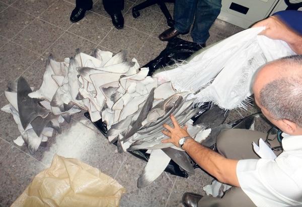 Las autoridades únicamente pudieron abrir tres sacos con aletas. Cada uno de ellos contenía 200 piezas y pesaba 40 kilos. | PRETOMA PARA LN