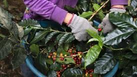 Empresas agrícolas claman por mano de obra nacional para recolección de cosechas