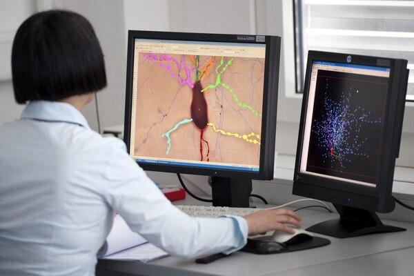 Se estima que el cerebro humano tiene unos 100.000 millones de neuronas, de unos 10.000 tipos distintos. EFE/Laurent Gillieron