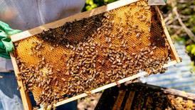 20 de mayo: Día Mundial de las Abejas se celebra con un  llamado a la conservación de este importante insecto
