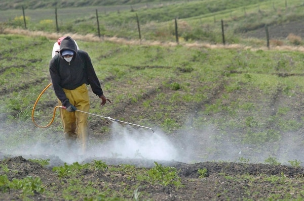Una menor área y atención a cultivos baja el uso de insumos. | ARCHIVO