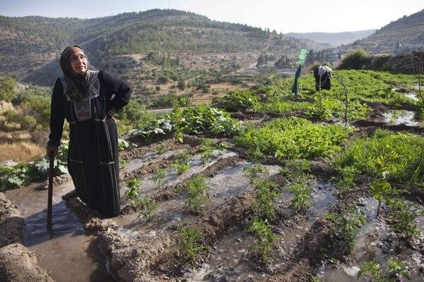 Las terrazas ubicadas en Battir, al sur de Jerusalén, fueron inscritas en la Lista de Patrimonio Mundial de la Unesco