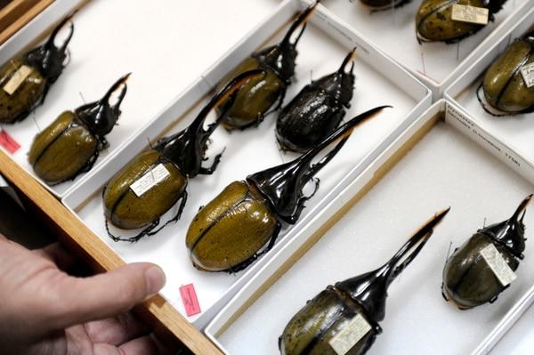 Las colecciones que traspasa el INBio al Museo Nacional consta de 3,5 millones de ejemplares. | MELISSA FERNÁNDEZ