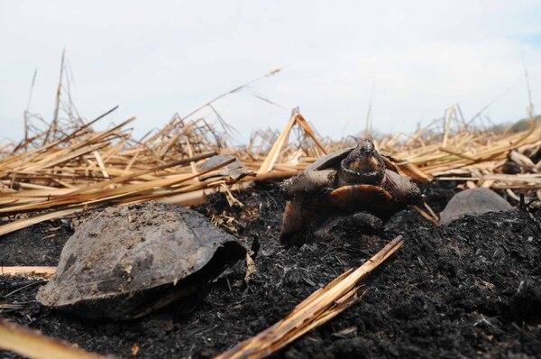 Ese parque sufre regularmente la destrucción por el fuego. En el 2010 se ubicaron tortugas quemadas luego de un gran incendio.