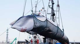 Japón retoma la caza comercial de ballenas y pone fin a moratoria de 30 años