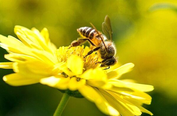 Al transportar el polen de una flor a otra, las abejas, mariposas, aves, murciélagos y otros polinizadores posibilitan y mejoran la producción de alimentos, contribuyendo así a la seguridad alimentaria y la nutrición. Imagen: Shutterstock