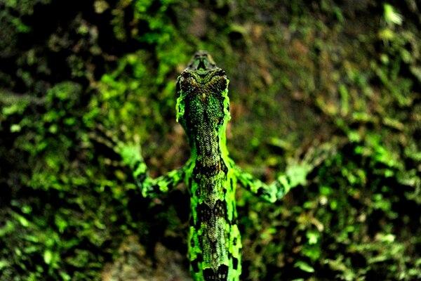 Visitar este parque le permitirá observar animales como el camaleón de montaña. | FOTO: MELISSA FERNÁNDEZ
