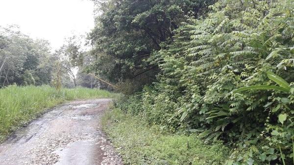 El terreno donde sembrará la piñera se llama Finca Palmar Sur.