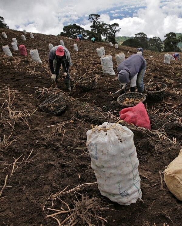 Los agricultores se oponen a la Alianza del Pacífico por las sensibilidades frente a los socios. El Ejecutivo estudia ese tema. | ALBERT MARÍN/ARCHIVO