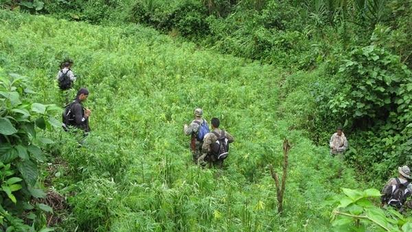La erradicación de la marihuana incluye largas caminatas por la montaña que dificultan la efectividad de las acciones policiales. | ESTEBAN MATA