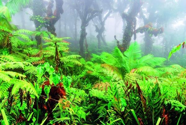 La vegetación es tan variada como la fauna del lugar. Cortesía Felipe López Pozuelo / Ojalá ediciones.