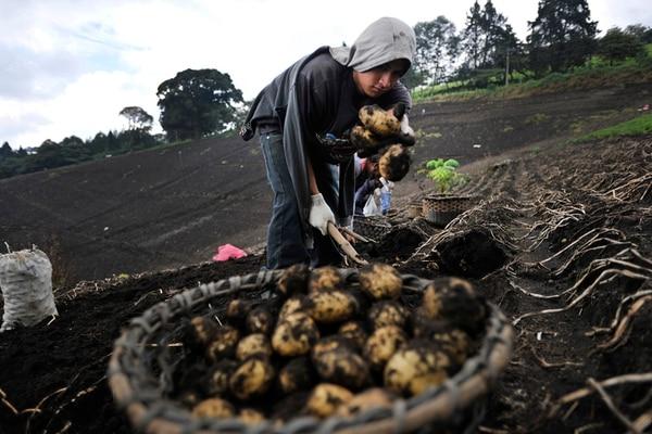 Costa Rica produce actualmente papa para mesa, que no tiene características para su utilización en la industria. Ya hay avance en el desarrollo de nuevas variedades con destino a la agroindustria.   RAFAEL MURILLO