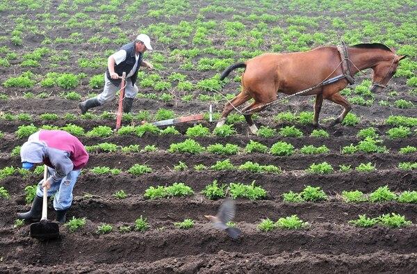 José María López (izq.) y Andrés Álvarez trabajan en su cosecha de papas, en las cercanías al volcán Irazú. Ambos procuran una cosecha libre de excesos de agroquímicos.