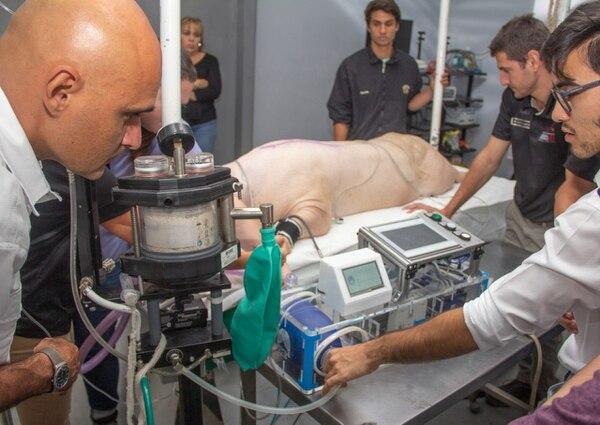 La primera prueba se realizó el pasado 30 de abril. La Cámara Costarricense de Porcicultores donó dos cerdos. Foto: Cortesía de UCR