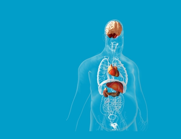 Cinco órganos pagan muy caro por los efectos de la obesidad - La Nación