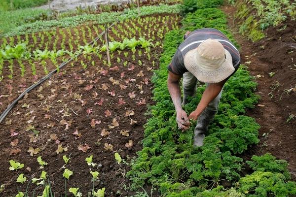 El Rinconcito Orgánico Irazú, en Potrero Cerrado de Oreamuno, tiene árboles de aguacate Hass, 40 tipos de hortalizas y brinda cursos de capacitación. | MAYELA LÓPEZ