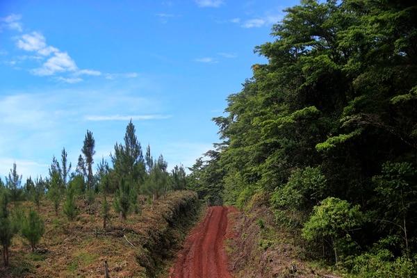 La empresa Cuestamoras Bosques quiere emular el proceso natural de recuperación de los bosques, con la siembra de varias especies nativas de distintos tipos de flora, que a su vez con el tiempo atraigan mayor biodiversidad de fauna. Foto: Rafael Pacheco