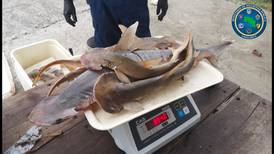 Pescadores detenidos por extraer tiburones juveniles en Manzanillo