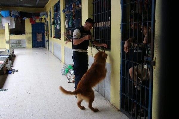 Con perros entrenados, oficiales de la Policía Penitenciaria revisaron el miércoles anterior las instalaciones de la cárcel La Leticia, en Pococí, Limón.