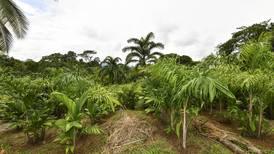 83 productores de palmito están en apuros por suspensión de compras de Demasa