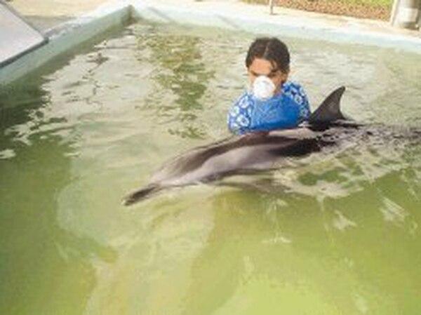 Gabriel Borbón, estudiante de turismo, es parte del grupo de voluntarios que ayuda a mantener a flote el delfín. El mamífero solo acepta, por ahora, pescado licuado.   MARVIN RAMOS /PARALA NACIÓN