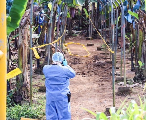 Los equipos forenses del Organismo de Investigación Judicial (OIJ) montaron un perímetro de 40 metros cuadrados alrededor del cuerpo para recopilar indicios. REINER MONTERO.
