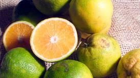 Frutas cítricas reducen riesgo de derrames cerebrales
