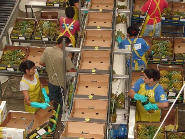 La exportación de piña, que subió en febrero un 17% interanual, impulsa el repunte del sector agrícola. | CARLOS HERNÁNDEZ/ ARCHIVO
