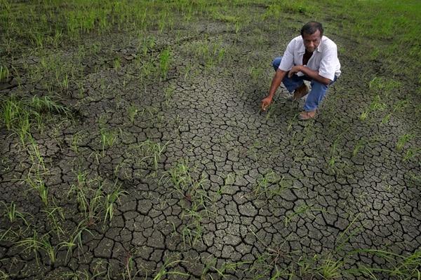 Didier Cascante mostró, en octubre del 2014, las cuatro hectáreas de arroz que perdió en el asentamiento La Piragua, en Río Cañas, Guanacaste. Desde julio del 2014, se decretó alerta amarilla y en setiembre se declaró emergencia por la sequía en esa provincia.   ALBERT MARÍN