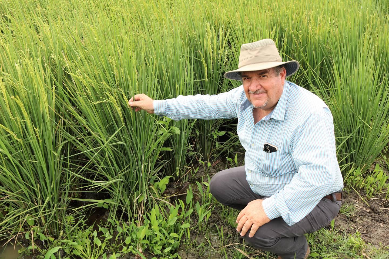 Israel Araya, productor de Bagatzí, mostró los excelentes resultados de la aplicación del Sistema Intensivo del Cultivo del Arroz, el cual cambia las prácticas tradicionales.