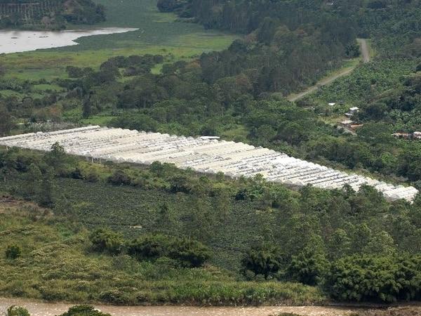 A pocos kilómetros de Orosi, es posible observar los toldos de la empresa Pelarica. La Sala IV estableció, en el año 2003, que esas estructuras provocan la contaminación visual de ese valle, en Paraíso de Cartago. Ileana Arauz