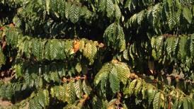 Investigación para autorizar cultivo de café Robusta será financiada por el sector privado